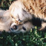 dog and cat cuddling in grass with teeth that are well cared for